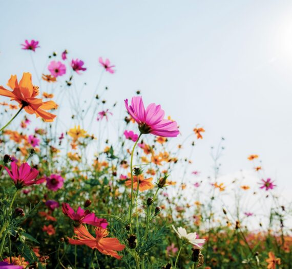Why Is Spring Such a Popular Season?